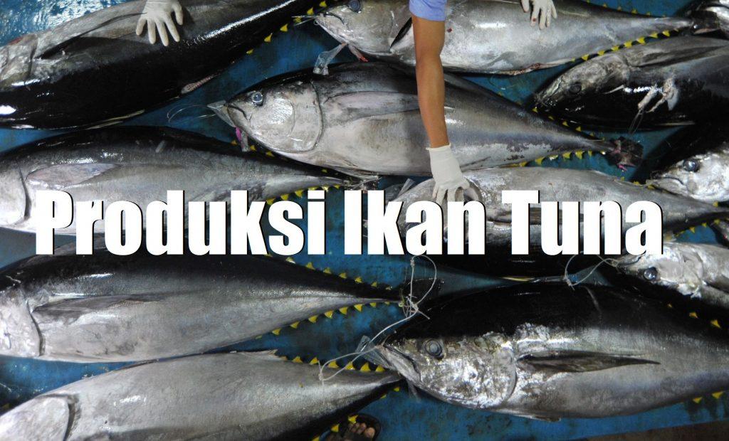 Produksi Ikan Tuna