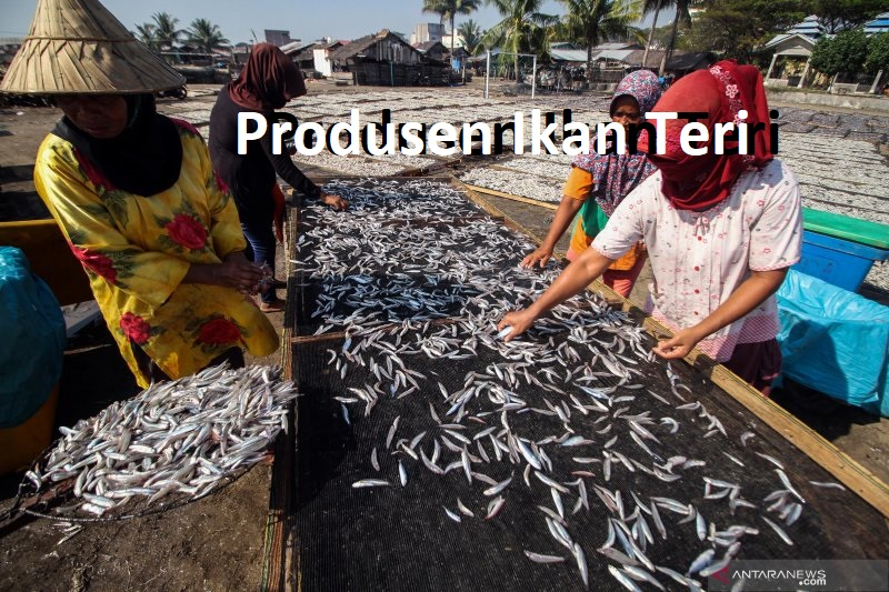 Produsen Ikan Teri