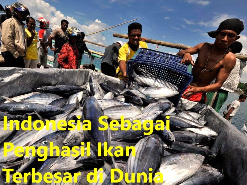 Indonesia Sebagai Penghasil Ikan Terbesar di Dunia